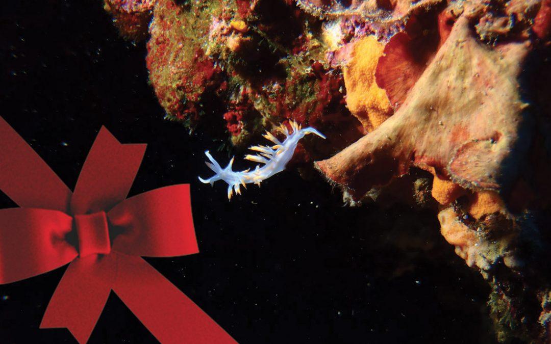 Cadeau plongée pour (vous) faire plaisir !
