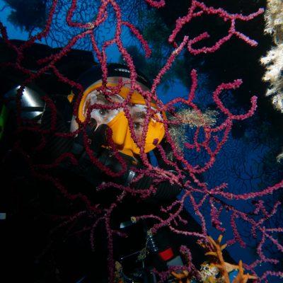formation biologie sous-marine