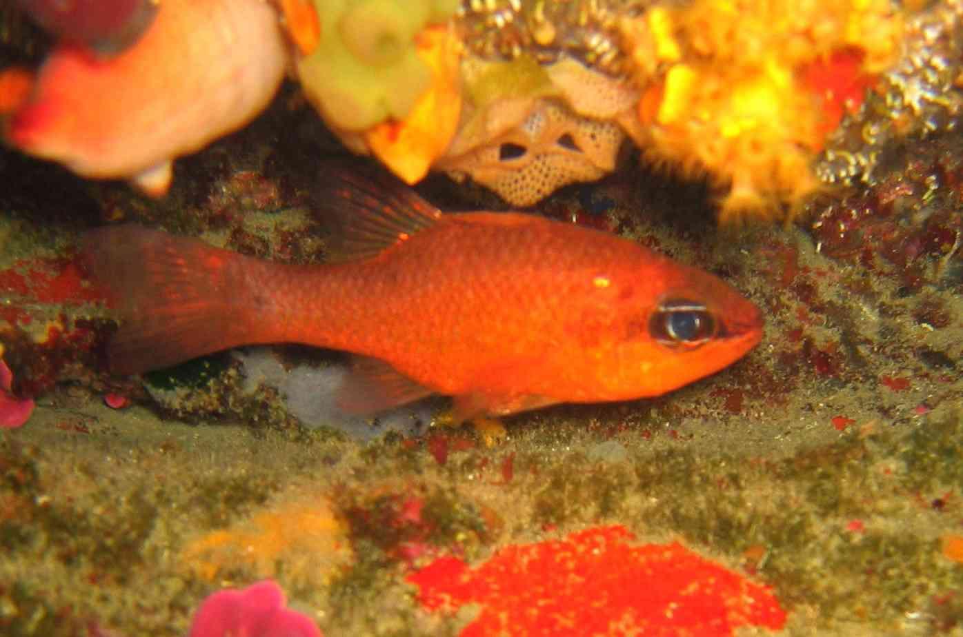 Formation identification de poisson