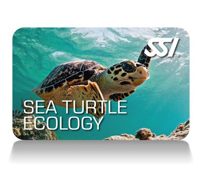Sea Turtle Ecology