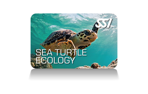 Sea Turtle Ecology SSI