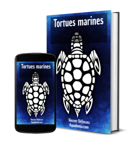 Guide Tortues marines