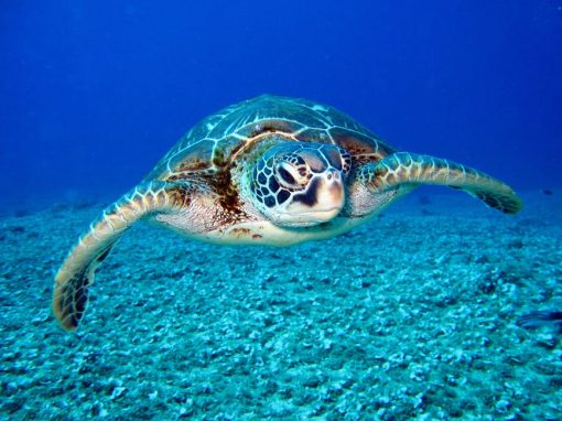 formation tortue