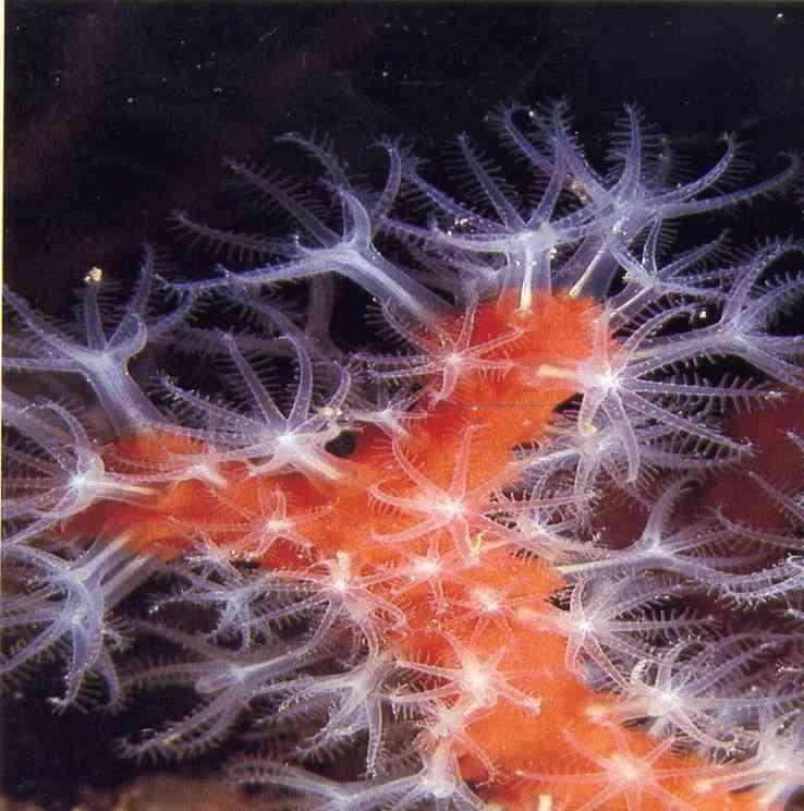 formation-biologie-sous-marine-2