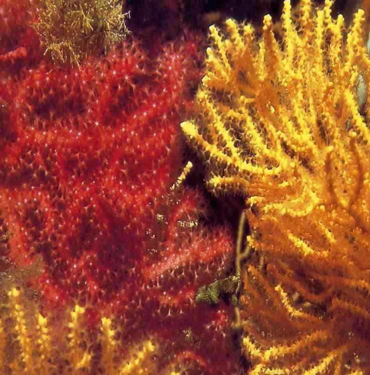 Stage plongée bio sous-marine