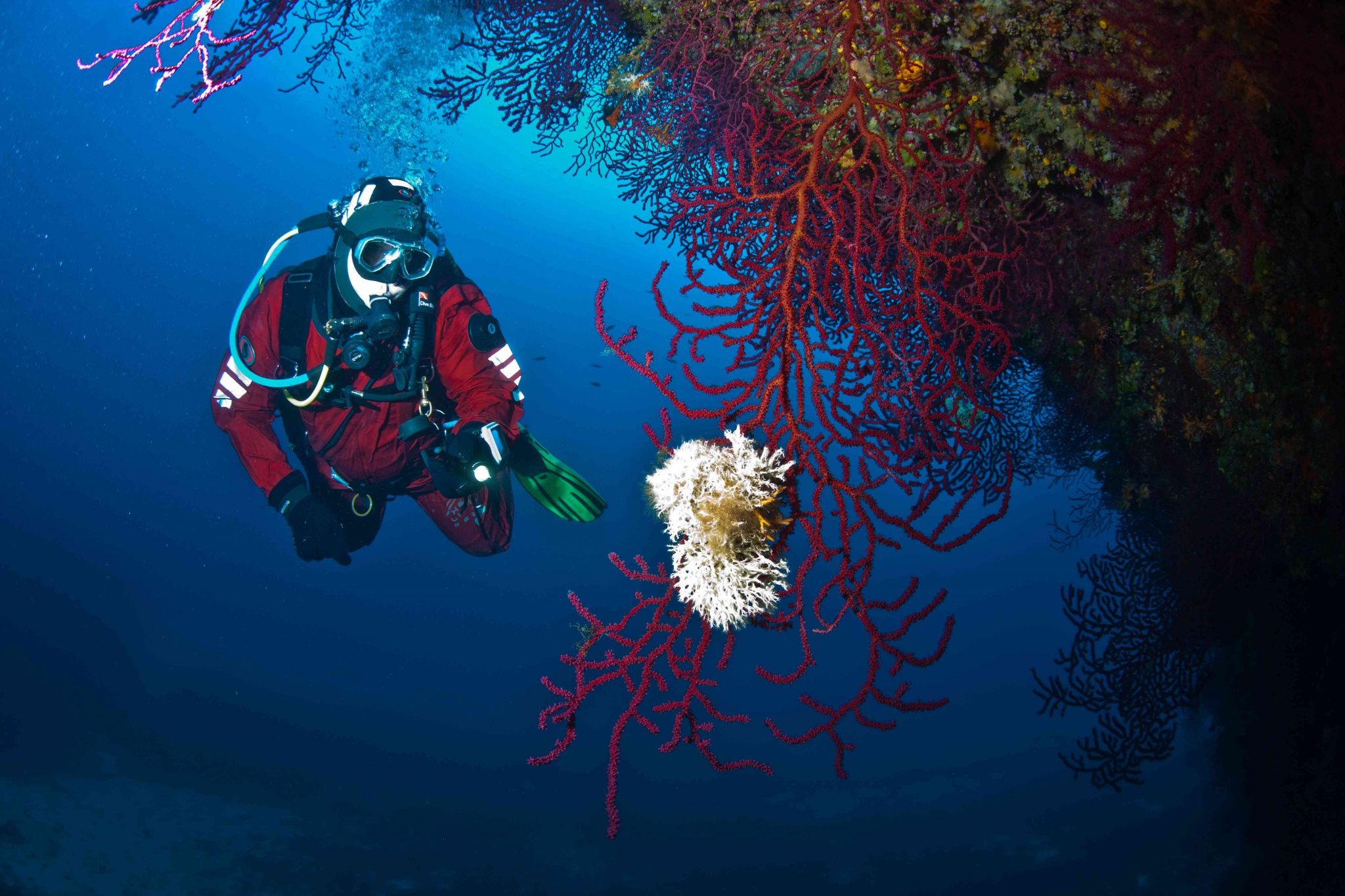Biologie sous-marine